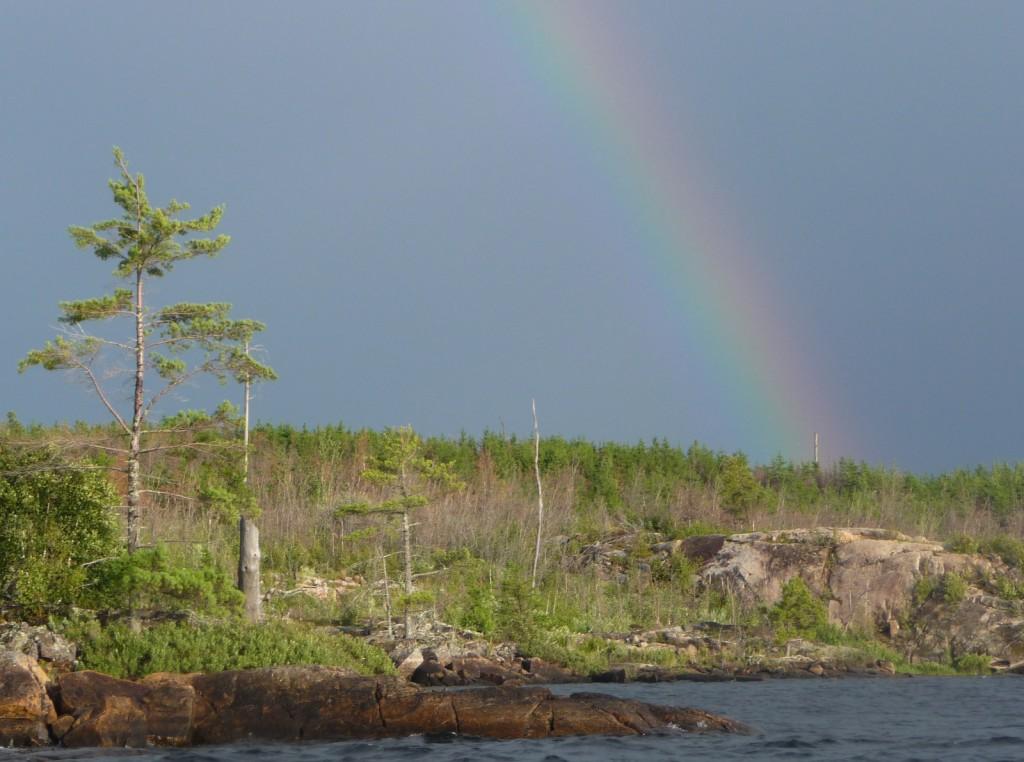 Pine and rainbow